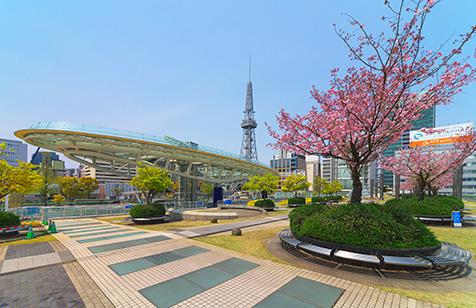 벚나무와 잔디의 광장